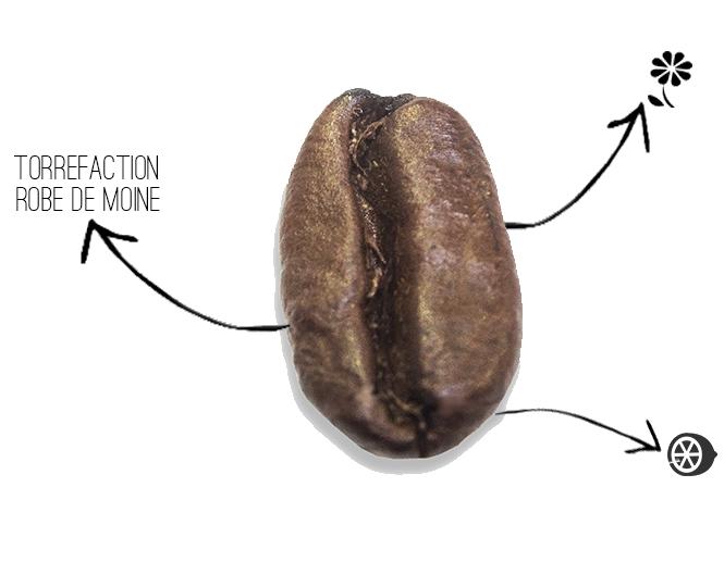 café Ethiopie lekempti sidamo